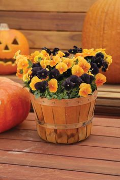 black and orange pansies in a fall basket
