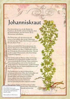 Johanniskraut www. Healing Herbs, Medicinal Herbs, Natural Healing, Greenhouse Gardening, Gardening Tips, Garden Types, Types Of Flowers, Aquaponics, Herbal Medicine