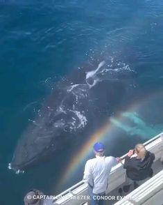 Cool Sea Creatures, Beautiful Sea Creatures, Ocean Creatures, Animals Beautiful, Big Animals, Animals Of The World, Cute Funny Animals, Nature Animals, Strange Animals