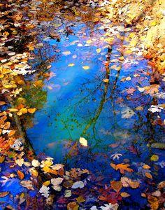 #Natura sama nam podpowiada najlepsze połączenia kolorów i smaków! Naturalnie z http://big-active.pl/  The Circle of Seasons by Misty Dawn Seidel