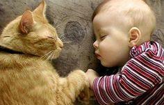 Fotografias e momentos de incrível doçura entre gatos e bebés humanos, que incluem uma importante aprendizagem para o futuro.