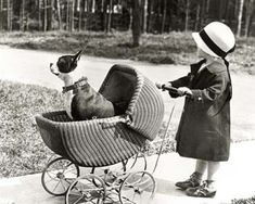 "Giving new meaning to ""take the dog for a walk"" Note the bulldog/pit bull, regarded as the ""nanny"" dog of the era."