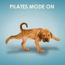 Pilates mode on                                                                                                                                                                                 More