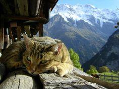 mountains cats sunlight hut Alps  / 1600x1200 Wallpaper