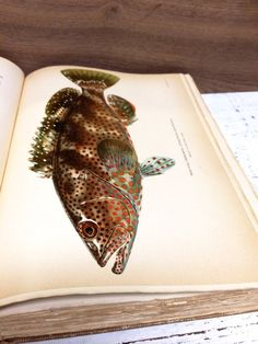 Antique Fish Book Fish Lithograph American Food by beachbabyblues