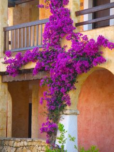 bougainvillea flower - beautiful - wish I could grow it here in MN :))