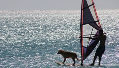 It's a dog's life on #FortMyersBeach http://blog.sunpalacevacationhomes.com/2017/02/its-a-dogs-life-on-fort-myers-beach/?utm_campaign=coschedule&utm_source=pinterest&utm_medium=Sun%20Palace%20Vacations&utm_content=It%27s%20a%20dog%27s%20life%20on%20Fort%20Myers%20Beach #PetFriendly #beaches #vacation #LoveFL #VisitFlorida #beachlife #beachvacation #vacation #Florida