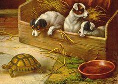 Various Dogs on Vintage Postcards, art, photos, illustrations