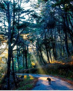 Ohiya forests Tree Rays #SriLanka  Photograper @diniduu  #TravelSriLanka #VisitSriLanka #nature #forest #animals #travel #holiday #tree