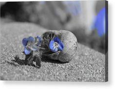 #shell #art #photography #Blue #Zulma #fineartphotography #tiny #flowers   https://fineartamerica.com/products/a-tiny-world-in-a-shell-zulma-mace-acrylic-print.html