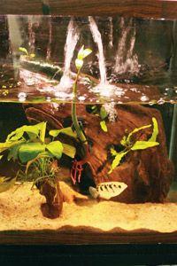 Plants for brackish aquariums