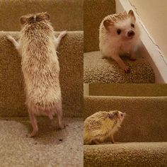 "~""Yay, I learned to climb the stairs!""~"