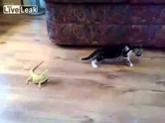 13 Best lol images in 2013 | Funny Animals, Cut animals, Cute kittens