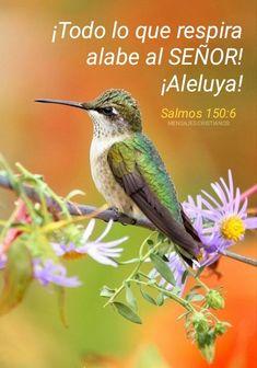 Small Birds, Colorful Birds, Little Birds, Exotic Birds, Polo Sul, Polo Norte, Pretty Birds, Love Birds, Beautiful Birds