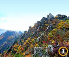 설악산 한계령 대청봉의 단풍 [사진 중앙포토]