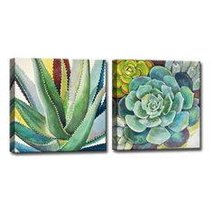Ready2HangArt 'Brilliant Succulents I/II' by Norman Wyatt Jr. 2-Pc Wrapped Canvas Art Set found on Polyvore featuring home, home decor, wall art, succulent wall art, canvas wall art, canvas art set and canvas home decor