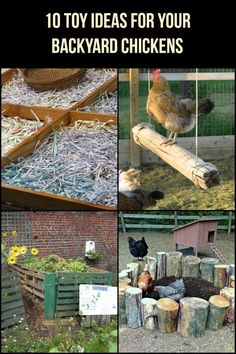 Toys for Your Backyard Chickens Let your chickens have some fun with these 10 inexpensive toy ideas!Let your chickens have some fun with these 10 inexpensive toy ideas! Chicken Garden, Backyard Chicken Coops, Diy Chicken Coop, Backyard Farming, Chickens Backyard, Chicken Run Ideas Diy, Small Chicken Coops, Backyard Ideas, Chicken Coop With Run