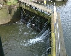 Heron appears to take a shower by the Thames: thematuretraveller.co.uk