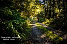 mtb Craigieburn Ecological Area West Coast