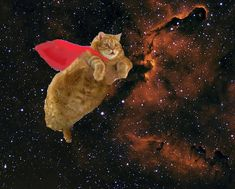 Super space cat!