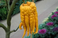10 Strange and Unusual Fruits and Vegetables From Around The World | Veggie Gardener