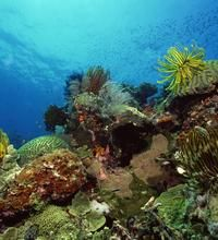 The Best Places for Shore Snorkeling in the Florida Keys