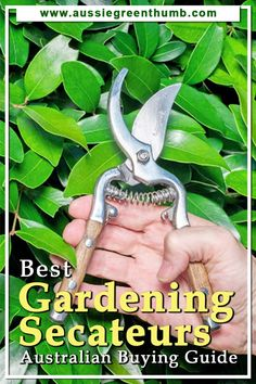 When looking for the best garden secateurs in Australia, you'll want to find a pair with a sturdy blade and handle that allows for effortlessly clean cuts. This guide will give you everything you need to know, from the different types of secateurs and what to look out for when making a purchase.#gardeningtips #buyersguide #asutralianguide Sustainable Gardening, Vegetable Gardening, Container Gardening, Gardening Tips, Amazing Gardens, Beautiful Gardens, Pruning Shrubs, Common Garden Plants, How To Clean Metal