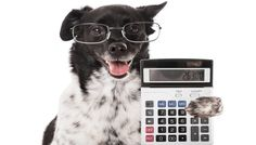 How Much Does a Dog Cost? Budgeting Guide for Dog Owners #CoffeePuppy http://snip.ly/yj6t8