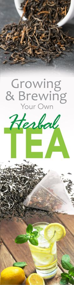 """Which tea do you prefer: Chamomile, Mint, Lavender, or Lemon Balm? Click here to learn how to grow and brew your own herbal tea! <a class=""""pintag"""" href=""""/explore/tea/"""" title=""""#tea explore Pinterest"""">#tea</a>"""