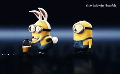 Here is the biggest funny minion quotes collection of All of us love minions, and these funny minion quotes will surely put a laugh on your face! Bellow despicable me funny minion quotes ar… Amor Minions, Minion Gif, Cute Minions, Minions Despicable Me, Minions Images, Funny Minion Pictures, Funny Minion Memes, Minions Quotes, Funny Videos