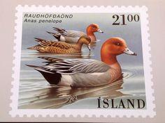 Août 2002 et un merveilleux voyage islandais.