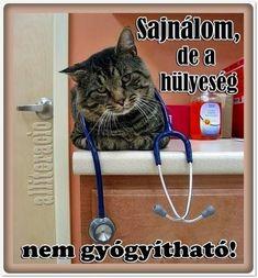 humoros, aranyos, állatos, képek, cica, macska, hülyeség,