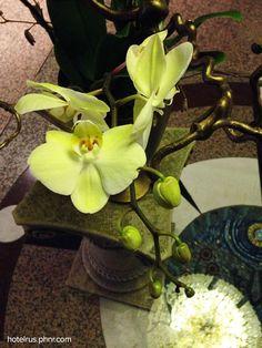 instead orchid tree