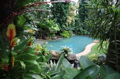 Pool Hundscheidt Garden, Brisbane