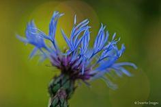 Incanto Images Fotografie: Blauw