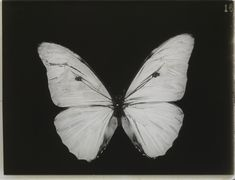 "Johannes Barbieri - ""Joly. Gray Aesthetic, Black And White Aesthetic, Aesthetic Grunge, Aesthetic Photo, Aesthetic Pictures, Artist Aesthetic, Aesthetic Drawing, Hipster Vintage, Art Ancien"