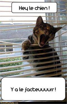 kitten and postman + dog /chat, facteur et chien #chat #humour #facteur #animalerie en ligne #chien