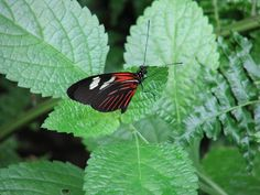 The Butterfly Exhibit At Frederik Meijer Gardens And Sculpture Park, In  Grand Rapids, Michigan