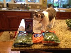 Mouthwatering homemade cat food recipes for your cat recipes mouthwatering homemade cat food recipes for your cat recipes pinterest homemade cat food cat food recipes and cat food forumfinder Image collections