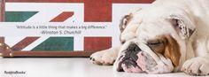 #cute #churchill #love Winston Churchill, Attitude, Dogs, Cute, Animals, Animales, Animaux, Pet Dogs, Kawaii
