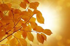 folhas de outono transparente - Pesquisa Google