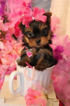 Gabriella's beautiful world: Yorkshire Terrier 'It sometimes takes days, even weeks, before a dog's nerves tire. In the case of terriers, it can run into months.' - E. B. White Photograph: http://www.yorkiebabies.com/ http://bit.ly/2L77rGh
