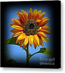Sunny Sunflower 1 Photograph by Chalet Roome-Rigdon - Sunny Sunflower 1 Fine Art Prints and Posters for Sale