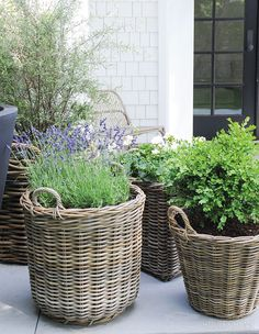 Buy Flowers Online Same Day Delivery Baskets Of Greenery Are Plentiful On The Back Porch. Picture taker: Tracey Ayton Designer: Architecture By Jennifer Heath Container Plants, Container Gardening, East Coast Style, Plant Design, Patio Design, Garden Planters, Porch Planter, Garden Inspiration, Garden Ideas