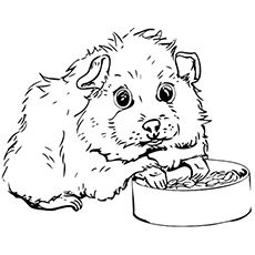 Guinea Pig Coloring Page | Coloring Pages | Pinterest | Drawing ideas