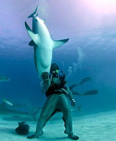 I'm not sure where this is, but I want to go. Because in this spot in the ocean you can juggle sharks. Badass.