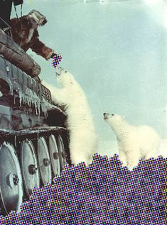 Collage by @Marina Zlochin Zlochin Zlochin Zlochin Molares #animal #collage #vintage #fun #bear #bears #polar