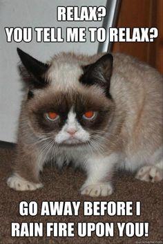 grumpy cat | grumpy cat, funny pictures