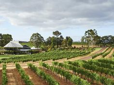 All The Best Margaret River Wineries You Should Have Been To Margaret River Western Australia, Margaret River Wineries, Door Picture, Napa Valley Wine, Spanish Wine, Down South, Travel Activities, Australia Travel, Trip Advisor