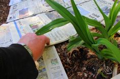 Using newspaper to smother weeds.  http://www.agardenforthehouse.com/2013/05/how-to-smother-weeds-with-newspaper/
